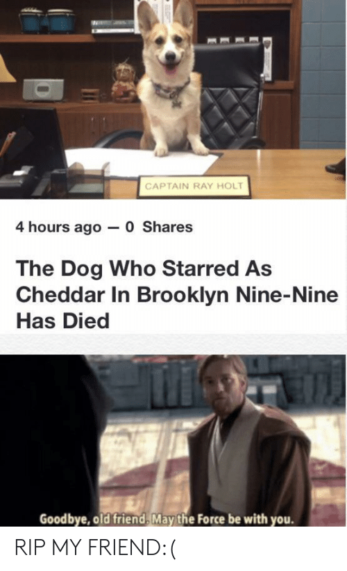 Brooklyn: CAPTAIN RAY HOLT  4 hours ago 0 Shares  The Dog Who Starred As  Cheddar In Brooklyn Nine-Nine  Has Died  Goodbye, old friend, May the Force be with you. RIP MY FRIEND:(