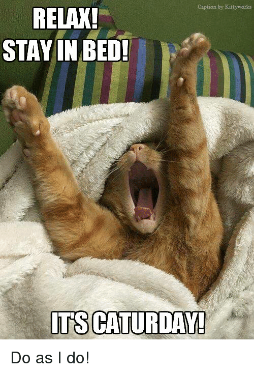 Caturday, Memes, and 🤖: Caption by Kittyworks  RELAX!  STAY IN BED!  ITS CATURDAY! Do as I do!