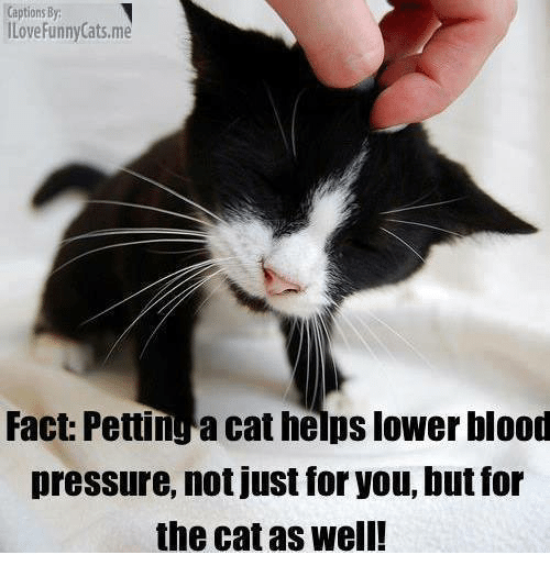 Not Funny Cat Meme : Captions by ilove funny catsme fact pettinga cat helps