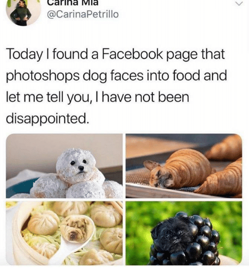 Dank, Disappointed, and Facebook: Carina Mla  @CarinaPetrillo  Today I found a Facebook page that  photoshops dog faces into food and  let me tell you, I have not been  disappointed.