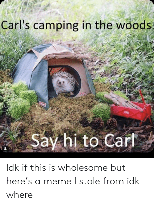 Meme, Wholesome, and Woods: Carl's camping in the woods  Say hi to Cart Idk if this is wholesome but here's a meme I stole from idk where
