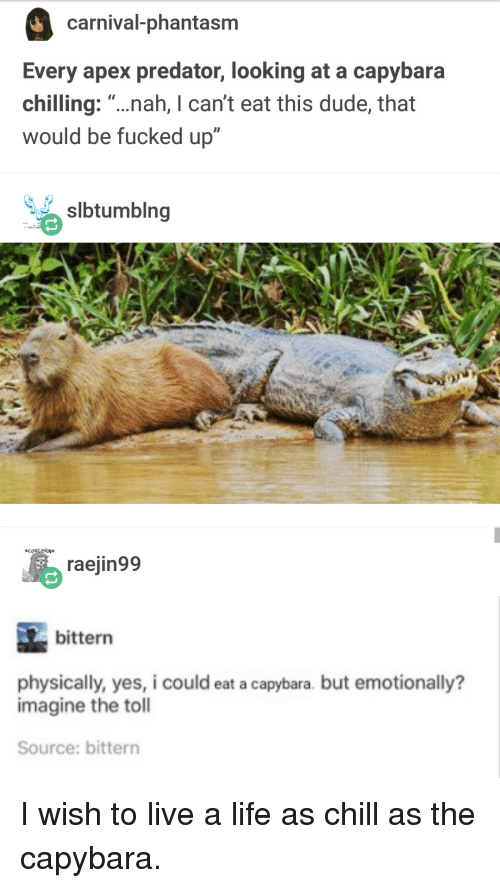 """toll: carnival-phantasm  Every apex predator, looking at a capybara  chilling: """"...nah, I can't eat this dude, that  would be fucked up""""  slbtumblng  CONCERN  raejin99  bittern  physically, yes, i could eat a capybara. but emotionally?  imagine the toll  Source: bittern I wish to live a life as chill as the capybara."""