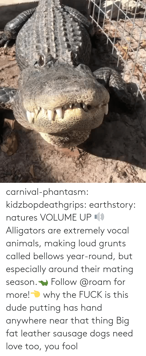 Volume Up: carnival-phantasm:  kidzbopdeathgrips:   earthstory:  natures VOLUME UP 🔊 Alligators  are extremely vocal animals, making loud grunts called bellows  year-round, but especially around their mating season.🐊 Follow @roam for more!👈   why the FUCK is this dude putting has hand anywhere near that thing   Big fat leather sausage dogs need love too, you fool