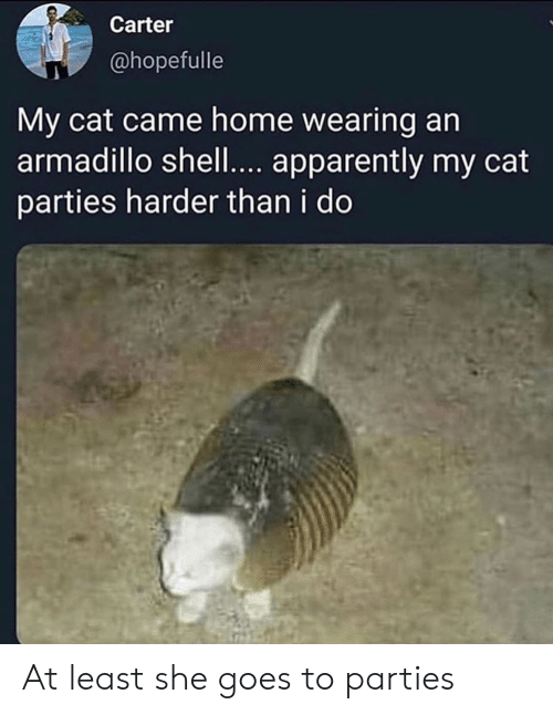 Apparently, Home, and Shell: Carter  @hopefulle  My cat came home wearing an  armadillo shell.... apparently my cat  parties harder than i do At least she goes to parties