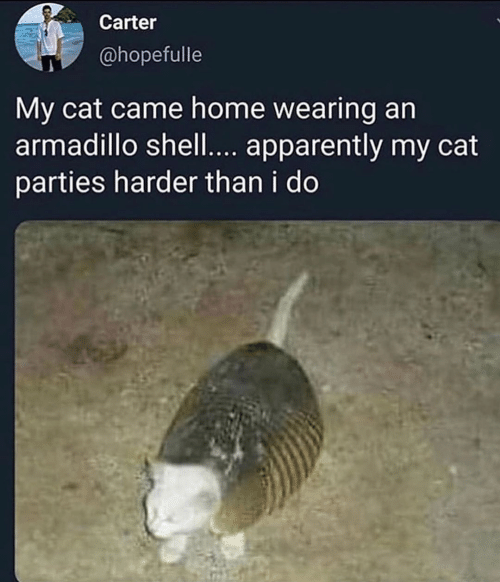 Apparently, Home, and Shell: Carter  @hopefulle  My cat came home wearing an  armadillo shell.... apparently my cat  parties harder than i do