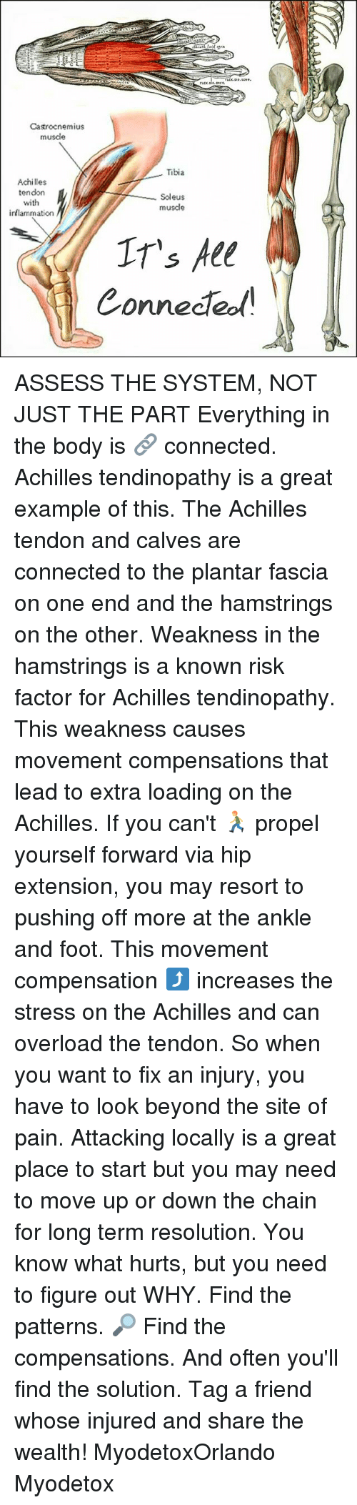 Memes, Connected, and Pain: Castrocnemius  musde  Tibia  Achilles  tendon  Soleus  with  muscle  inflammation  IT's All  Connected ASSESS THE SYSTEM, NOT JUST THE PART Everything in the body is 🔗 connected. Achilles tendinopathy is a great example of this. The Achilles tendon and calves are connected to the plantar fascia on one end and the hamstrings on the other. Weakness in the hamstrings is a known risk factor for Achilles tendinopathy. This weakness causes movement compensations that lead to extra loading on the Achilles. If you can't 🏃 propel yourself forward via hip extension, you may resort to pushing off more at the ankle and foot. This movement compensation ⤴ increases the stress on the Achilles and can overload the tendon. So when you want to fix an injury, you have to look beyond the site of pain. Attacking locally is a great place to start but you may need to move up or down the chain for long term resolution. You know what hurts, but you need to figure out WHY. Find the patterns. 🔎 Find the compensations. And often you'll find the solution. Tag a friend whose injured and share the wealth! MyodetoxOrlando Myodetox