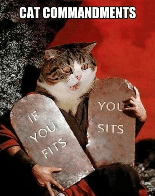 Cat, You, and Sits: CAT COMMANDMENTS  IF  YOU  YOU  SITS  FITS