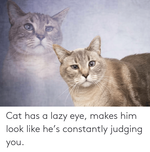 eye: Cat has a lazy eye, makes him look like he's constantly judging you.