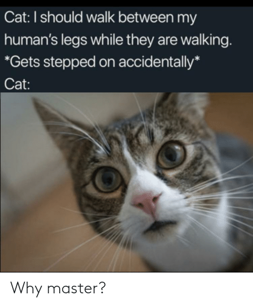 They Are: Cat: I should walk between my  human's legs while they are walking.  *Gets stepped on accidentally*  Cat: Why master?