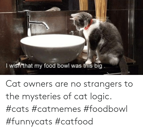 Cats, Logic, and Cat: Cat owners are no strangers to the mysteries of cat logic. #cats #catmemes #foodbowl #funnycats #catfood