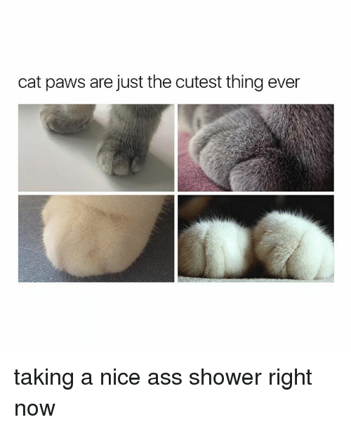 A Nice Ass: cat paws are just the cutest thing ever taking a nice ass shower right now
