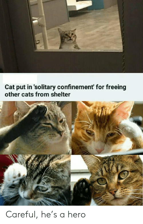 shelter: Cat put in 'solitary confinement' for freeing  other cats from shelter Careful, he's a hero