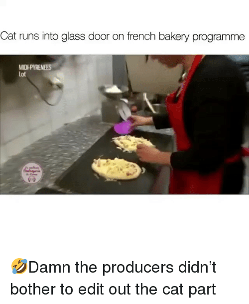 Memes, French, and 🤖: Cat runs into glass door on french bakery programme  MID  Lot 🤣Damn the producers didn't bother to edit out the cat part