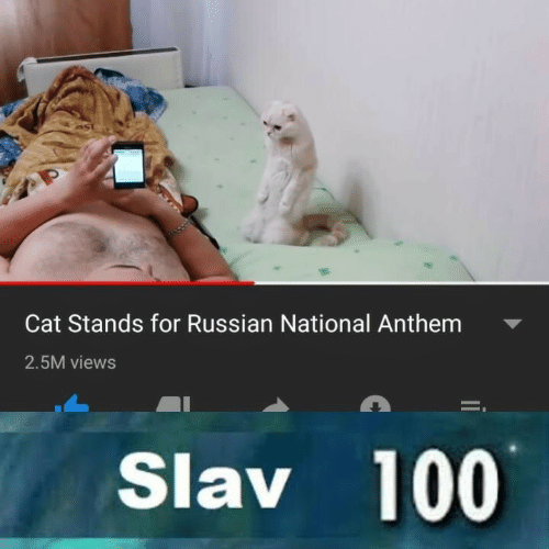 National Anthem, Russian, and Slav: Cat Stands for Russian National Anthem  2.5M views  Slav 100