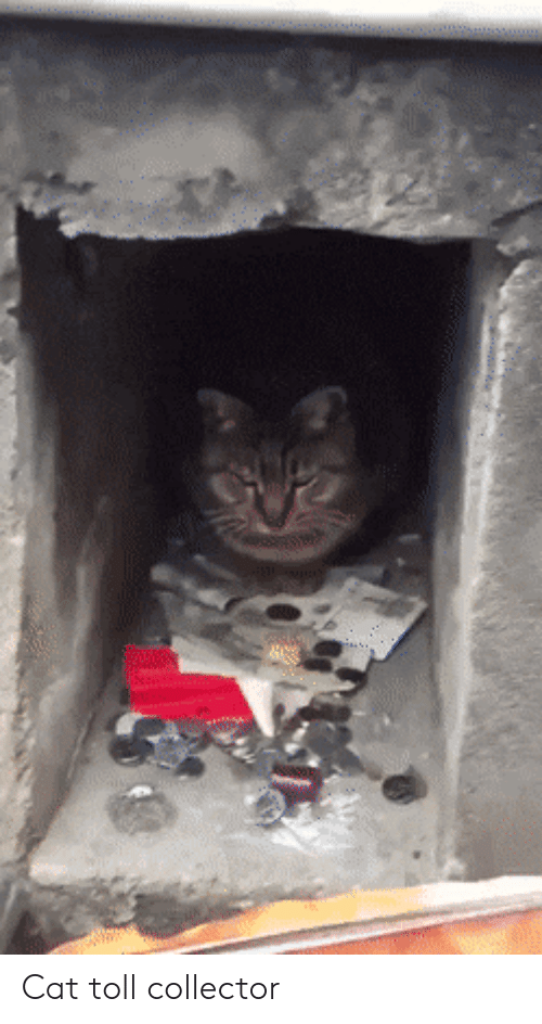 toll: Cat toll collector