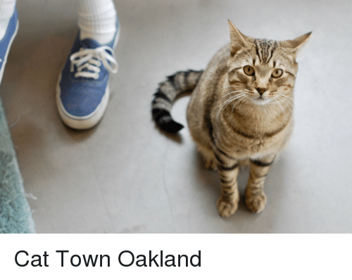Cat, Town, and  Oakland