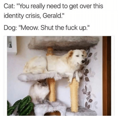 """Fuck, Shut the Fuck Up, and Humans of Tumblr: Cat: """"You really need to get over this  identity crisis, Gerald.""""  Dog: """"Meow. Shut the fuck up."""""""