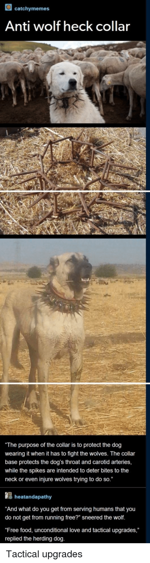 """Tactical: catchymemes  Anti wolf heck collar  The purpose of the collar is to protect the dog  wearing it when it has to fight the wolves. The collar  base protects the dog's throat and carotid arteries,  while the spikes are intended to deter bites to the  neck or even injure wolves trying to do so.  s heatandapathy  And what do you get from serving humans that you  do not get from running free?"""" sneered the wolf.  Free food, unconditional love and tactical upgrades,  replied the herding dog. Tactical upgrades"""
