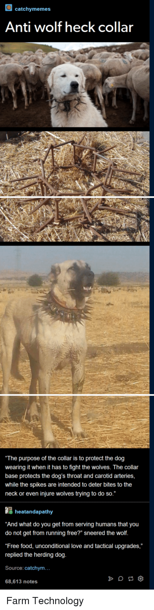 """Tactical: catchymemes  Anti wolf heck collar  The purpose of the collar is to protect the dog  wearing it when it has to fight the wolves. The collar  base protects the dog's throat and carotid arteries,  while the spikes are intended to deter bites to the  neck or even injure wolves trying to do so.""""  heatandapathy  And what do you get from serving humans that you  do not get from running free?"""" sneered the wolf  Free food, unconditional love and tactical upgrades,  replied the herding dog  Source: catchym...  68,613 notes Farm Technology"""