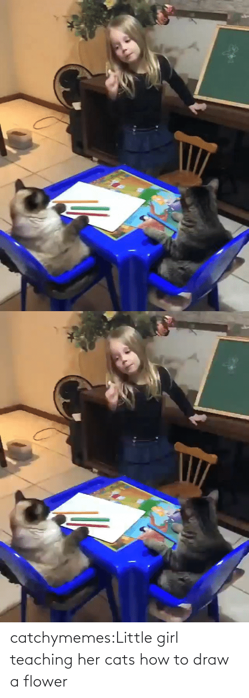 Cats: catchymemes:Little girl teaching her cats how to draw a flower