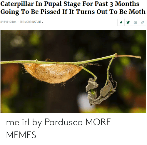 caterpillar: Caterpillar In Pupal Stage For Past 3 Months  Going To Be Pissed If It Turns Out To Be Moth  8/14/18 1:34pm SEE MORE: NATURE me irl by Pardusco MORE MEMES