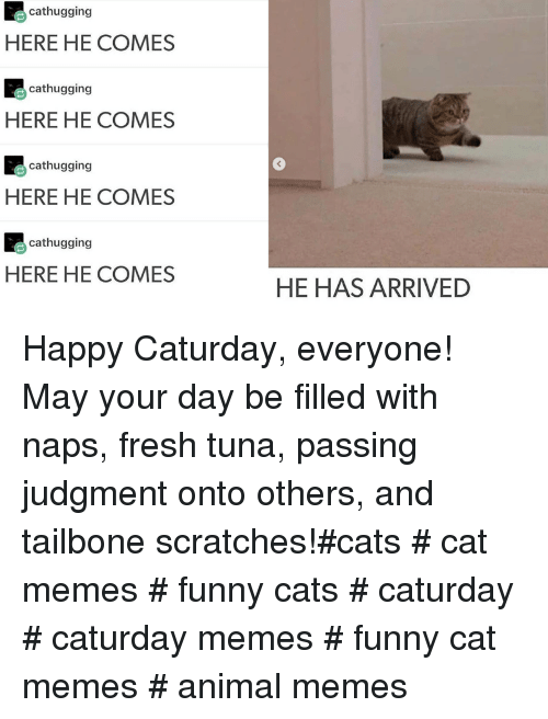 funny cats: cathugging  HERE HE COMES  cathugging  HERE HE COMES  cathugging  3  HERE HE COMES  cathugging  HERE HE COMES  HE HAS ARRIVED Happy Caturday, everyone! May your day be filled with naps, fresh tuna, passing judgment onto others, and tailbone scratches!#cats # cat memes # funny cats # caturday # caturday memes # funny cat memes # animal memes