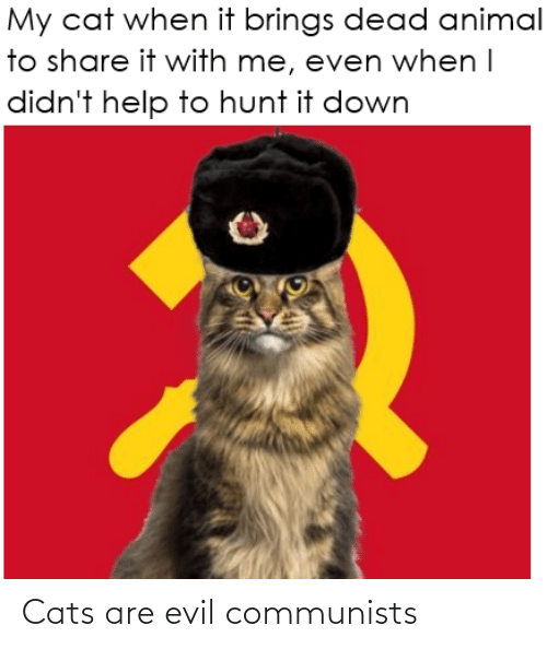 Cats Are: Cats are evil communists