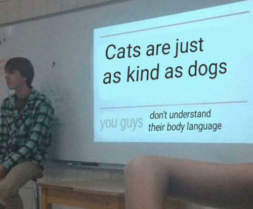 Cats Are: Cats are just  as kind as dogs  don't understand  you guys their body language