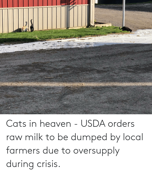 Dumped: Cats in heaven - USDA orders raw milk to be dumped by local farmers due to oversupply during crisis.