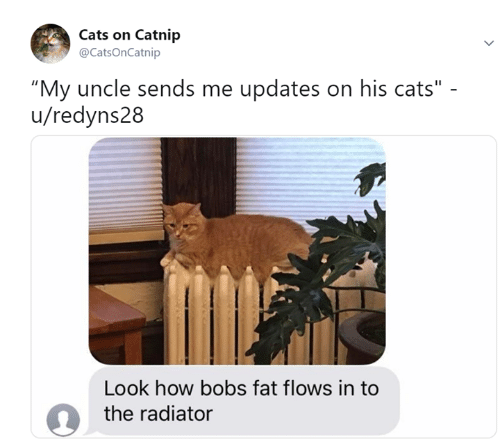 """Bobs: Cats on Catnip  @CatsOnCatnip  """"My uncle sends me updates on his cats""""  u/redyns28  Look how bobs fat flows in to  the radiator"""