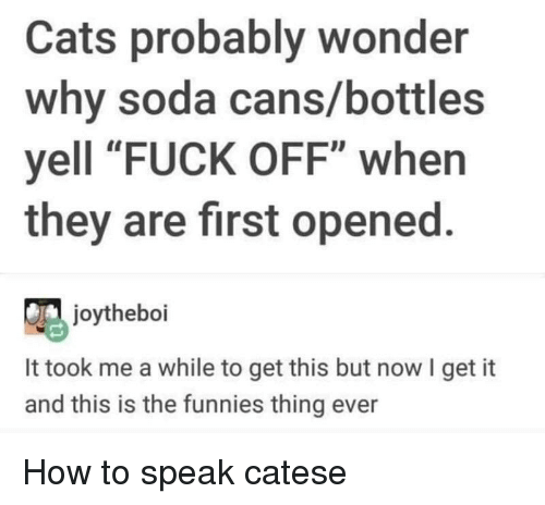 """Cats, Soda, and Fuck: Cats probably wonder  why soda cans/bottles  yell """"FUCK OFF"""" when  they are first opened.  joytheboi  It took me a while to get this but now I get it  and this is the funnies thing ever How to speak catese"""