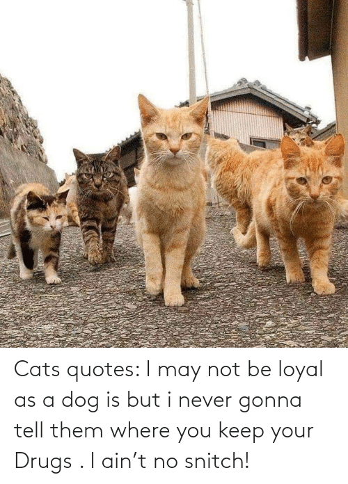 No Snitch: Cats quotes: I may not be loyal as a dog is but i never gonna tell them where you keep your Drugs . I ain't no snitch!