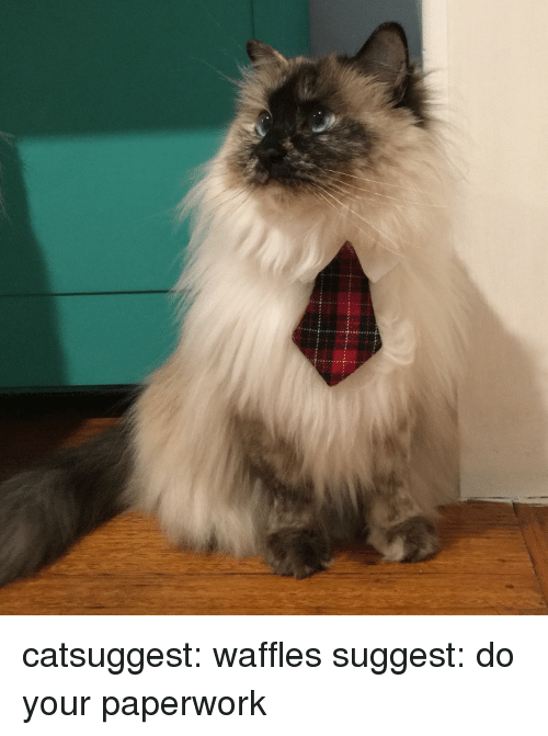 waffles: catsuggest:  waffles suggest: do your paperwork
