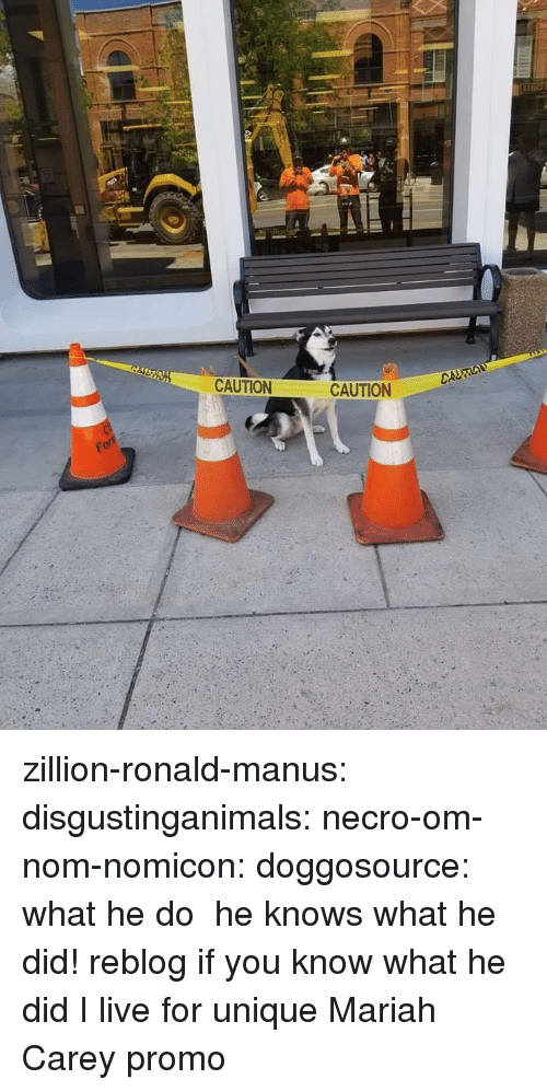 Mariah Carey, Tumblr, and Blog: CAUTION  CURO  CAUTION zillion-ronald-manus:  disgustinganimals:  necro-om-nom-nomicon:  doggosource: what he do  he knows what he did!  reblog if you know what he did    I live for unique Mariah Carey promo