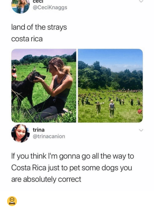 Costa Rica: cec  @CeciKnaggs  land of the strays  costa rica  trina  @trinacanion  If you think I'm gonna go all the way to  Costa Rica just to pet some dogs you  are absolutely correct 😩