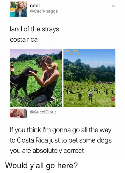 Costa Rica: ceci  @CeciKnaggs  land of the strays  costa rica  @GucciClout  If you think I'm gonna go all the way  to Costa Rica just to pet some dogs  you are absolutely correct Would y'all go here?