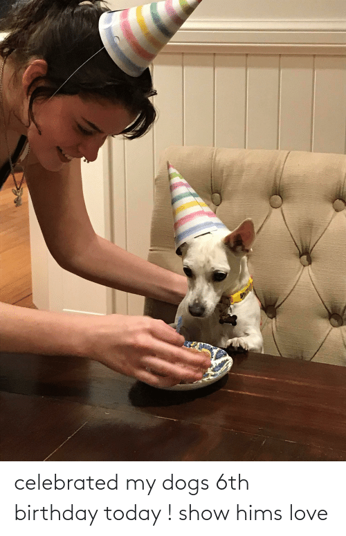 Celebrated: celebrated my dogs 6th birthday today ! show hims love