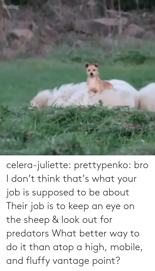 job: celera-juliette:  prettypenko: bro I don't think that's what your job is supposed to be about    Their job is to keep an eye on the sheep & look out for predators What better way to do it than atop a high, mobile, and fluffy vantage point?