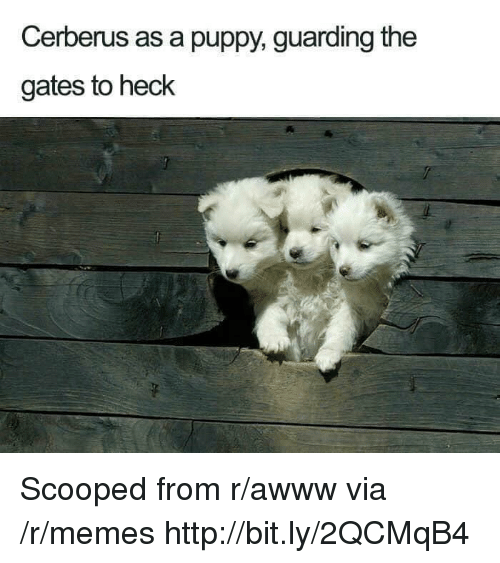 Memes, Http, and Puppy: Cerberus as a puppy, guarding the  gates to heck Scooped from r/awww via /r/memes http://bit.ly/2QCMqB4