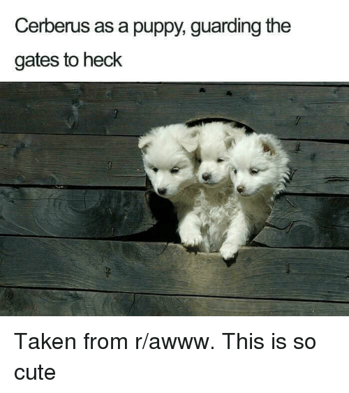 Cute, Taken, and Puppy: Cerberus as a puppy, guarding the  gates to heck Taken from r/awww. This is so cute