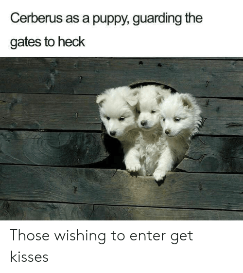 guarding: Cerberus as a puppy, guarding the  gates to heck Those wishing to enter get kisses