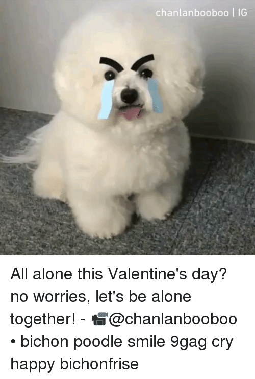 poodle: chanlanbooboo | IG All alone this Valentine's day? no worries, let's be alone together! - 📹@chanlanbooboo • bichon poodle smile 9gag cry happy bichonfrise