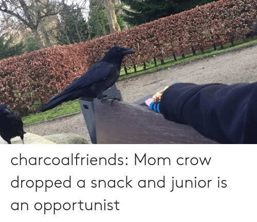 Tumblr, Blog, and Mom: charcoalfriends:  Mom crow dropped a snack and junior is an opportunist