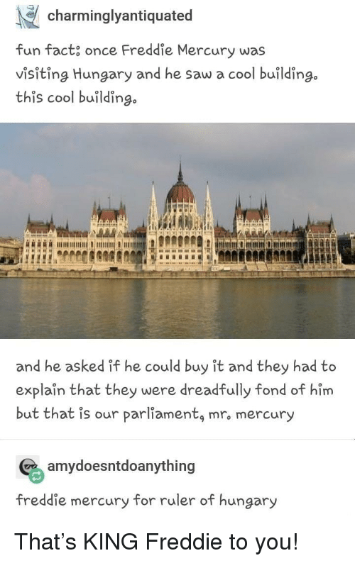 fond: charminglyantiquated  fun fact, once Freddie Mercury was  visiting Hungary and he saw a cool building.  this cool buildin  go  and he asked if he could buy it and they had to  explaîn that they were dreadfully fond of him  but that is our parliamentą mro mercury  amydoesntdoanything  freddie mercury for ruler of hungary That's KING Freddie to you!