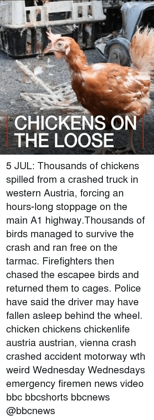 tarmac: CHICKENS ON  THE LOOSE 5 JUL: Thousands of chickens spilled from a crashed truck in western Austria, forcing an hours-long stoppage on the main A1 highway.Thousands of birds managed to survive the crash and ran free on the tarmac. Firefighters then chased the escapee birds and returned them to cages. Police have said the driver may have fallen asleep behind the wheel. chicken chickens chickenlife austria austrian, vienna crash crashed accident motorway wth weird Wednesday Wednesdays emergency firemen news video bbc bbcshorts bbcnews @bbcnews