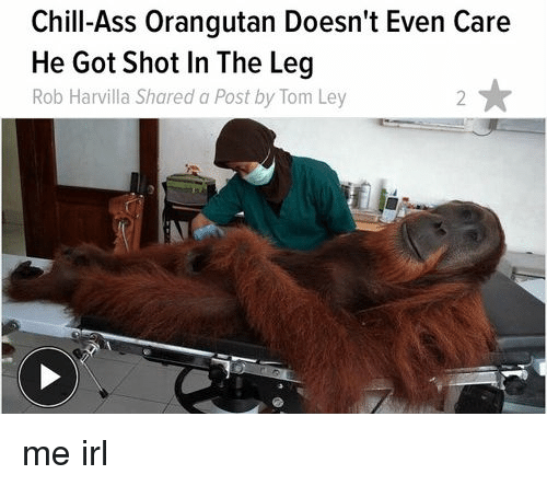 Chill Ass Orangutan
