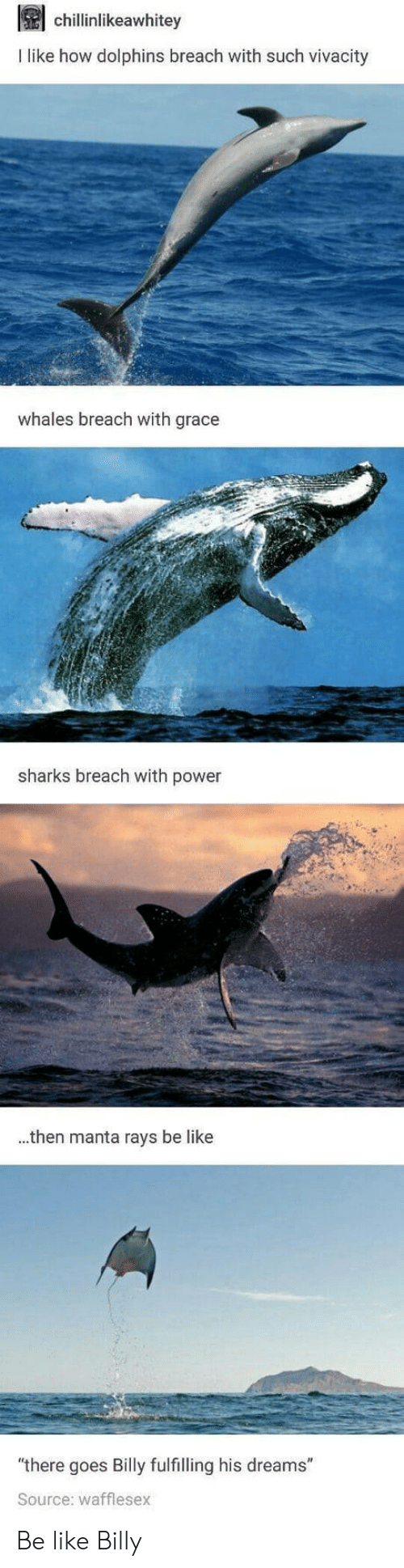 """Be Like, Dolphins, and Power: chillinlikeawhitey  I like how dolphins breach with such vivacity  whales breach with grace  sharks breach with power  ..then manta rays be like  """"there goes Billy fulfilling his dreams""""  Source: wafflesex Be like Billy"""