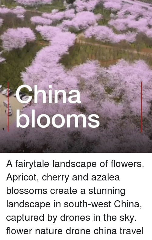 Drone, Memes, and China: China  blooms A fairytale landscape of flowers. Apricot, cherry and azalea blossoms create a stunning landscape in south-west China, captured by drones in the sky. flower nature drone china travel