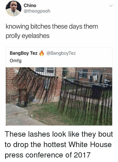 Funny, White House, and House: Chino  otheogpooh  knowing bitches these days them  prolly eyelashes  BangBoy Tez @BangboyTez  Omfg These lashes look like they bout to drop the hottest White House press conference of 2017