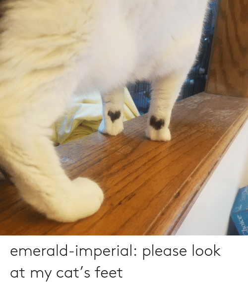 Look At My: Choice emerald-imperial:  please look at my cat's feet